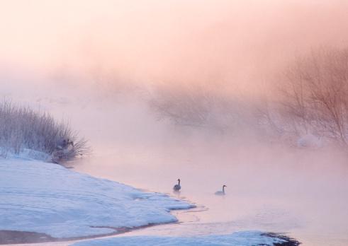Water Bird「River in Winter」:スマホ壁紙(18)