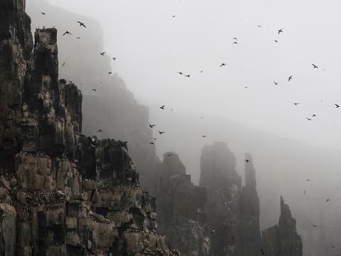 Svalbard and Jan Mayen「Mountain bird sanctuary, Svalbard, Norway」:スマホ壁紙(10)