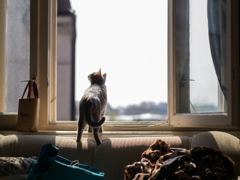 猫「Cute tabby cat looking out the window」:スマホ壁紙(1)