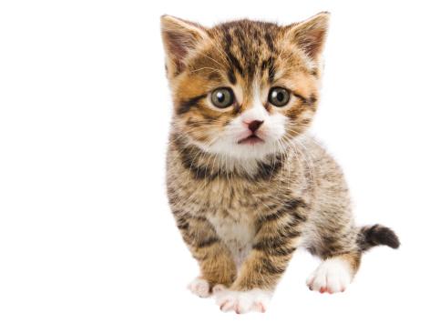 トラ猫「かわいい tabby キトン」:スマホ壁紙(13)
