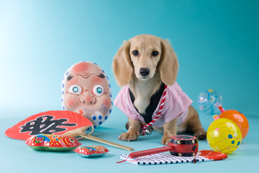 Hyottoko「Dachshund Puppy and Summer Festival」:スマホ壁紙(11)