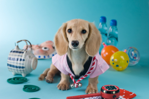 Hyottoko「Dachshund Puppy and Summer Festival」:スマホ壁紙(10)