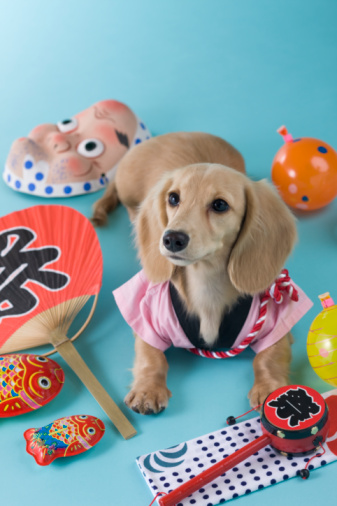Hyottoko「Dachshund Puppy and Summer Festival」:スマホ壁紙(2)