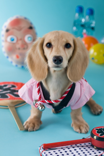 Hyottoko「Dachshund Puppy and Summer Festival」:スマホ壁紙(17)