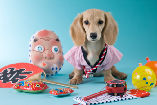 夏「Dachshund Puppy and Summer Festival」:スマホ壁紙(16)
