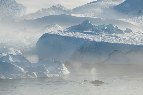 Environment「Western Greenland Hit By Unseasonably Warm Weather」:写真・画像(7)[壁紙.com]