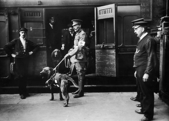 動物「Dogs Of War」:写真・画像(15)[壁紙.com]