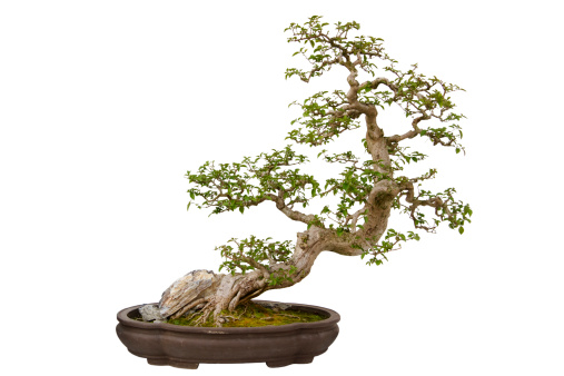 Planting「Paper flower bonsai tree isolated on a white background」:スマホ壁紙(1)