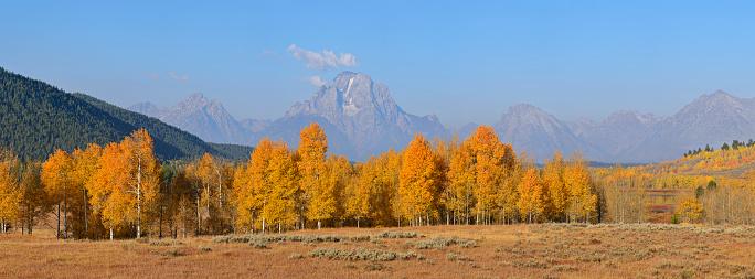 Aspen Tree「USA, Wyoming, Jackson, Mount Moran and fall colored Aspens at Grand Teton National Park」:スマホ壁紙(0)