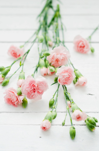 カーネーション「Rosy dianthus flowers on wooden table, close up」:スマホ壁紙(0)
