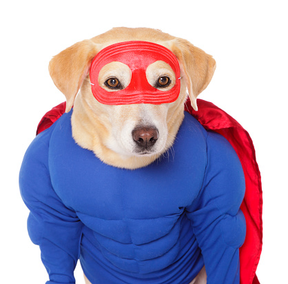 Cape - Garment「Superhero Dog」:スマホ壁紙(9)