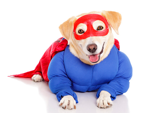 Cape - Garment「Superhero Dog」:スマホ壁紙(4)