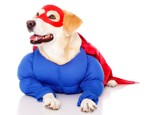 Cape - Garment「Superhero Dog」:スマホ壁紙(15)