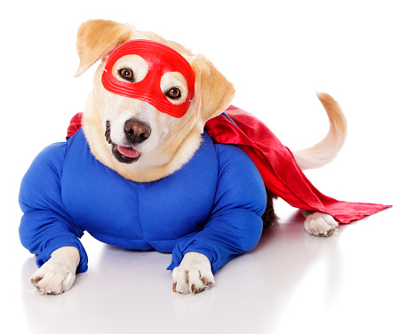 Shaking「Superhero Dog」:スマホ壁紙(2)