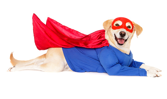ハロウィン 仮装「スーパーヒーロー犬」:スマホ壁紙(9)