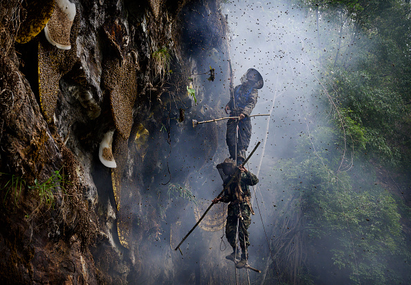 Environmental Issues「Yunnan Honey Hunters Scale Cliffs For Liquid Gold」:写真・画像(1)[壁紙.com]