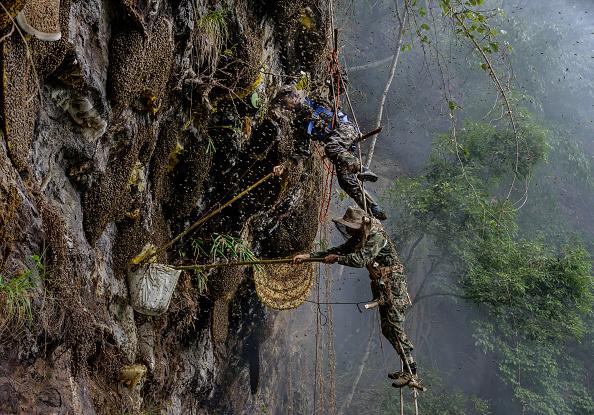 Honey「Yunnan Honey Hunters Scale Cliffs For Liquid Gold」:写真・画像(3)[壁紙.com]