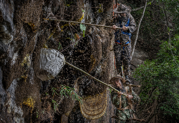 Sweet Food「Yunnan Honey Hunters Scale Cliffs For Liquid Gold」:写真・画像(10)[壁紙.com]
