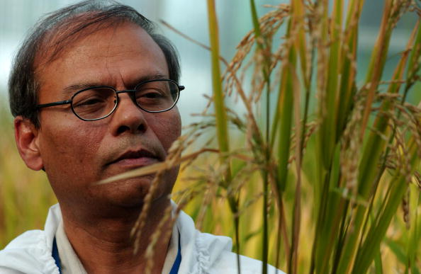 飲食「Bio Tech Lab Produces GM Rice In The Philippines」:写真・画像(9)[壁紙.com]