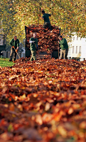 葉・植物「Autumn Colour Brightens Up London」:写真・画像(18)[壁紙.com]