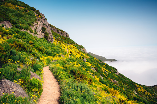 Footpath「Path To Pico Ruivo On Madeira Island」:スマホ壁紙(6)