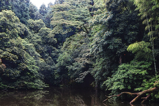 草地「京都で小さな森の川」:スマホ壁紙(0)