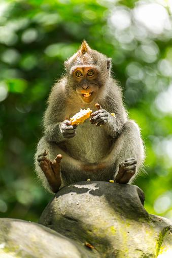 バリ島「Scene in Monkey Forest」:スマホ壁紙(17)