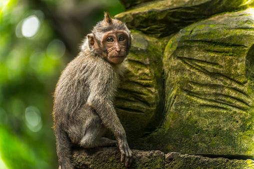 バリ島「Scene in Monkey Forest」:スマホ壁紙(16)