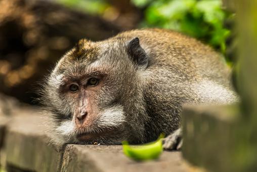 バリ島「Scene in Monkey Forest」:スマホ壁紙(18)