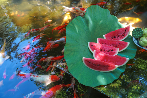 Carp「The pond water melon」:スマホ壁紙(3)