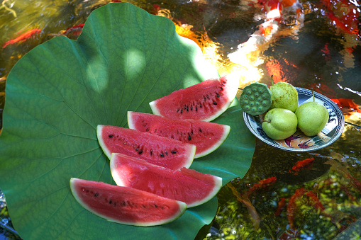 Carp「The pond water melon」:スマホ壁紙(11)