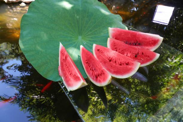 The pond water melon:スマホ壁紙(壁紙.com)