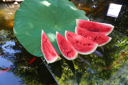 Carp「The pond water melon」:スマホ壁紙(2)