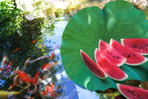 Carp「The pond water melon」:スマホ壁紙(19)