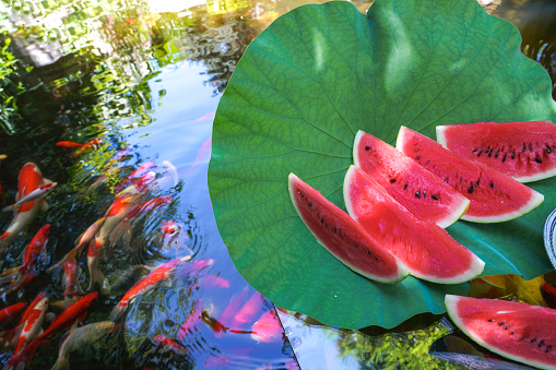 Carp「The pond water melon」:スマホ壁紙(4)