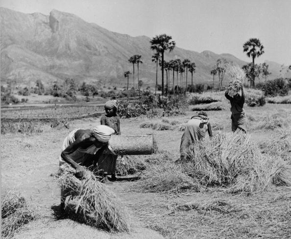 Agriculture「Indian Harvest」:写真・画像(18)[壁紙.com]