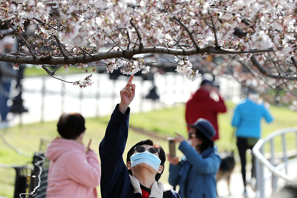 Tourism「Washington, DC Cherry Blossoms Reach Peak As Coronavirus Brings City To Standstill」:写真・画像(14)[壁紙.com]