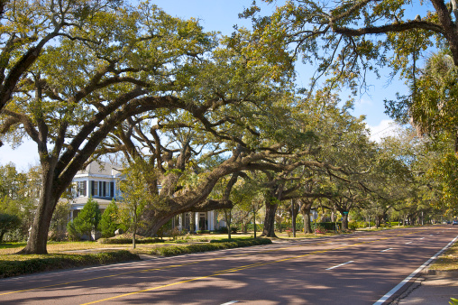 Southern USA「Live oaks spanning Government Street in Oakleigh Gardents Historic District, Mobile, Alabama」:スマホ壁紙(13)