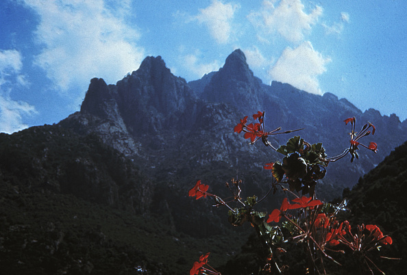 Mountain「Mountain Flower」:写真・画像(17)[壁紙.com]
