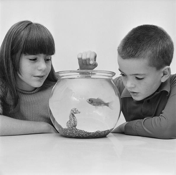 魚・熱帯魚「Going Down Under」:写真・画像(7)[壁紙.com]