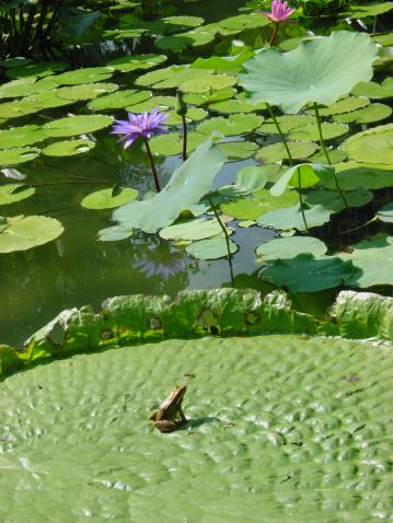 Water Lily「Get Ready!」:スマホ壁紙(19)