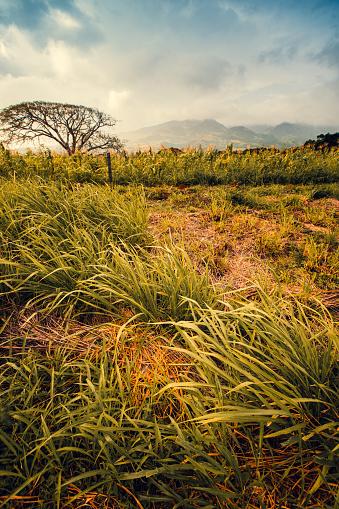 Eco Tourism「Tenorio Volcano Area, Costa Rica Nature, Landscape」:スマホ壁紙(1)
