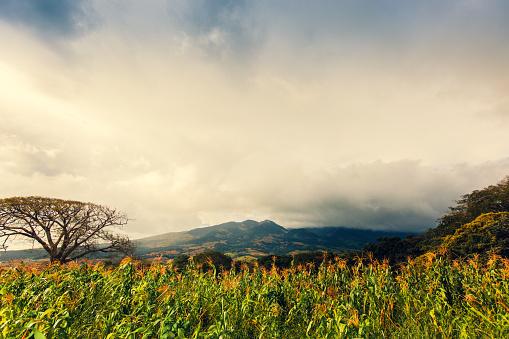 Wilderness Area「Tenorio Volcano Area, Costa Rica Nature, Landscape」:スマホ壁紙(6)