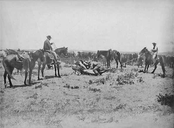 Grass Family「Inspecting A Brand On The Prairies」:写真・画像(5)[壁紙.com]