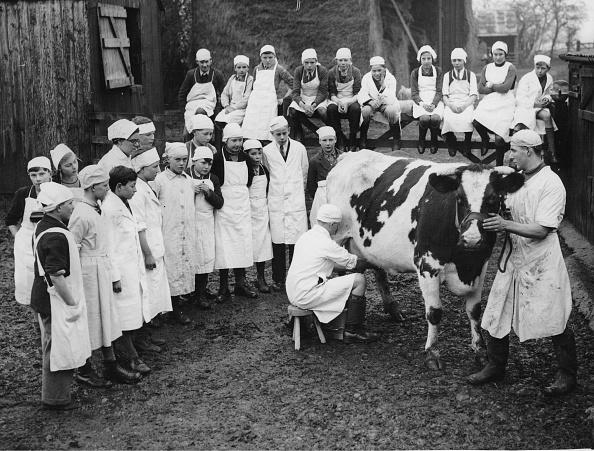 Farm「Schulkionder Learn Milking Cows」:写真・画像(4)[壁紙.com]