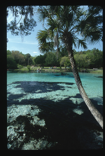 Ocala National Forest「Silver Glen Springs」:スマホ壁紙(14)