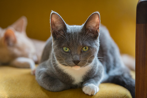 Encinitas「Orange cat and grey cat at home.」:スマホ壁紙(17)