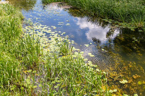 Water's Edge「Summertime in Constable Country - The River Stour at Nayland, Suffolk UK」:スマホ壁紙(8)