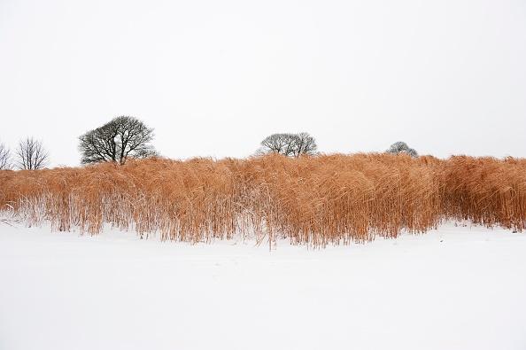 風景(季節別)「Elephant Grass In Snow」:写真・画像(16)[壁紙.com]