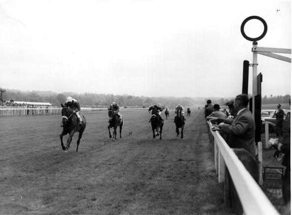 Wooden Post「Lingfield Park」:写真・画像(18)[壁紙.com]